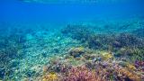 Големият бариерен риф бедства заради затоплящия се климат
