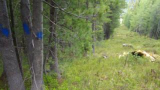Разрешиха ремонта на лифт Тодорка, но без изсичане на дървета