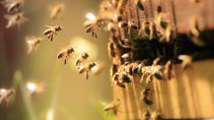 Отпускат близо 4,5 млн. лева за пчеларите
