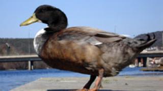 Нова епидемия от птичи грип в Хонг Конг