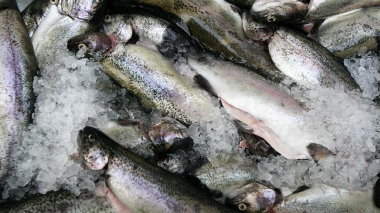 БАБХ проверява каква риба ни продават за Никулден