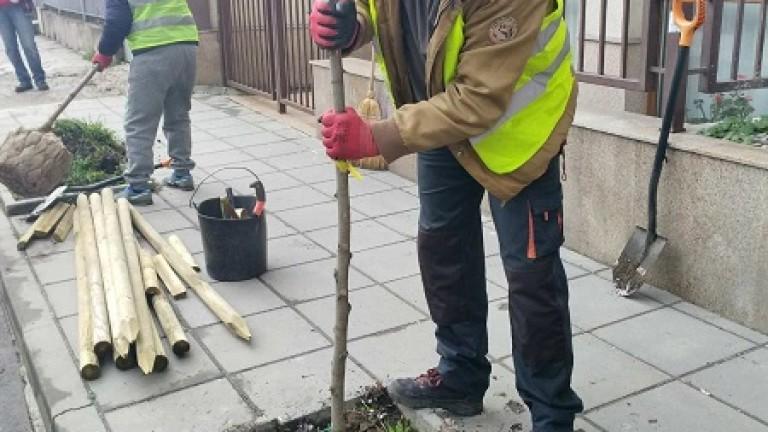 Засаждат дървета по столичните улици и булеварди