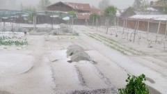 Опустошителна градушка удари село Българене