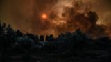 Пожарите в Гърция взеха 96 жертви