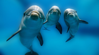 Нова Зеландия и забраната за снимки и плуване с делфини
