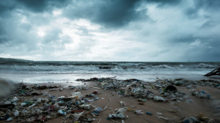 Окисляването на океана може да доведе до масово измиране на морския живот