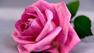 Розова градина в памет на всички донори