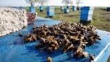 Масово измиране на пчели в Плевенско