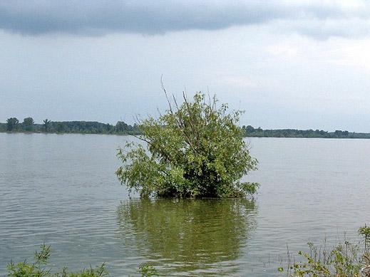Прорязват дигата на река Тимок