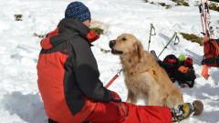 Преди 45 години спасителите качили кучета в планината