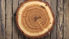 Дърво като стомана