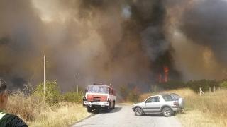 Пожарът край Гълъбово е овладян