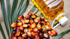 Ще спре ли ЕС да използва палмово масло в горивата?