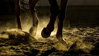 Борят се за живота на 14-годишна ездачка, затисната от коня си в Шумен