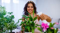 Вредата от стайните растения, за която не сме се замисляли