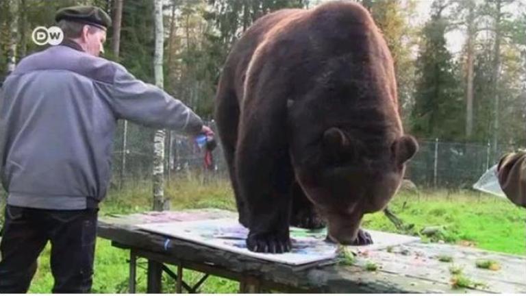 Мечка рисува картини (ВИДЕО)