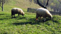 Овцевъдите обмислят масови протести