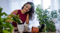 Пролетно съживяване на растенията