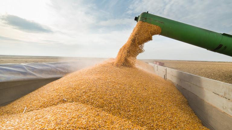 Двете земеделски култури, за които 2017-а ще бъде историческа откъм добив