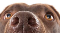Как кучетата виждат света чрез носа си