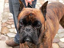 Затвориха ветеринарна аптека във Велико Търново