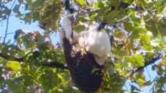 Успешно приключи схемата за кредитиране по програмата по пчеларство