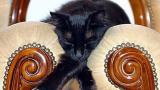 Днес отбелязваме и световния ден на котката