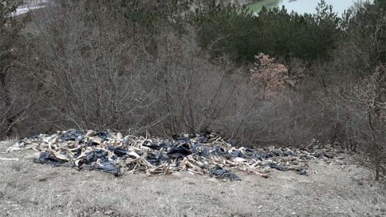 Откриха голямо количество неправомерно загробени патици в Старозагорско