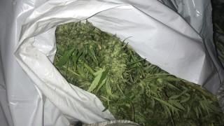 От дрегера на КАТ през обиска до нивата с марихуана