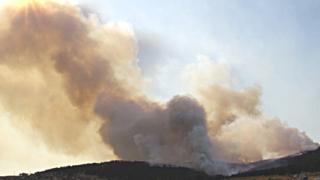Възстановяват опожарените гори край Стара Загора с SMS-акция