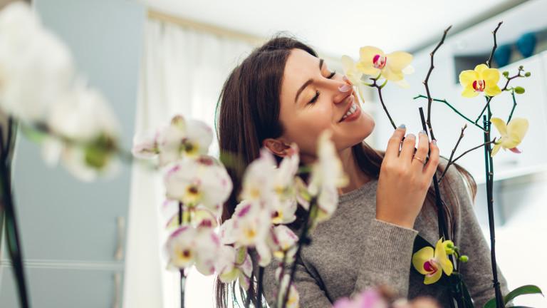 Правилните грижи, които искат орхидеите