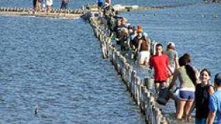 Еколози спасяват световно застрашени птици на Поморийското езеро