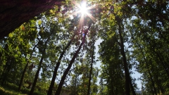 Остър недостиг на горски инспектори в Търновско и Габровско