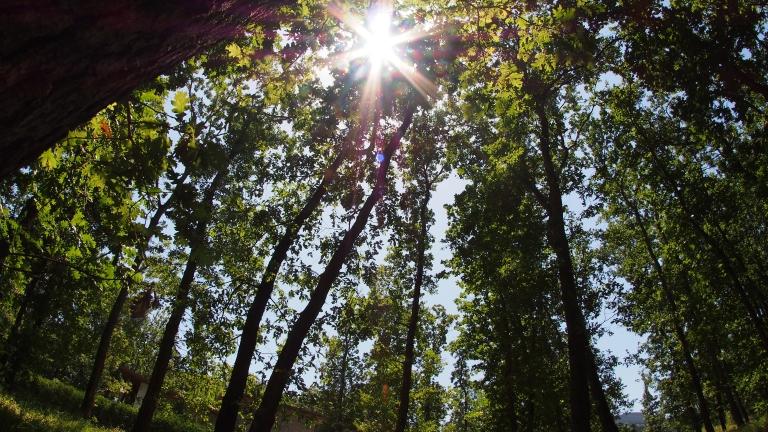 С над 1 млн. евро възстановяваме горите в Североизточна България