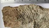 Български учени откриха на Антарктида  растения от древния суперконтинент Гондвана
