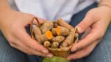 Куркумата, ползите за здравето и защо да я консумираме по-често