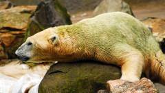 Тръмп отваря защитен природен резерват в Аляска за петролни сондажи