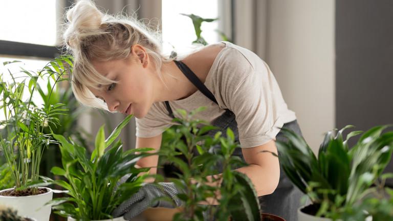 Какви растения да отглеждаме в кухнята