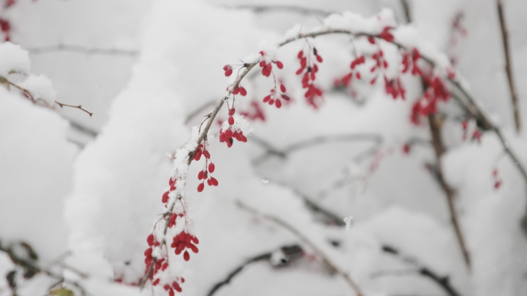 Любопитни факти за снега