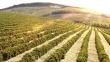 Кафе, захар, портокали: производството на кои храни ще спадне заради екстремния климат