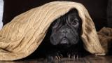 Ford Quiet Kennel - шумоустойчивата кучешка къща