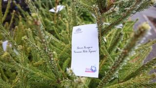 Продават 10 000 живи елхи в помощ на семейства с репродуктивни проблеми