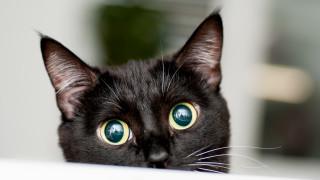 Разпознават ли котките имената си