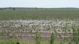 Държавата пази земеделците от градушки, но срещу заплащане