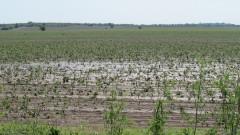 70 000 дка земеделски земи са поразени от пороите и градушките