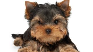 Бургазлийки отмъкнаха кучето на своя приятелка под носа й