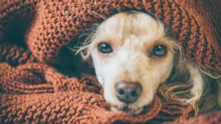 Кучетата също не спят от притеснение