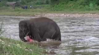 Да бъдеш спасен от слон