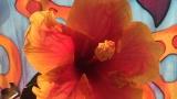 Нона Йотова щастлива, китайската й роза цъфна