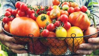 Какво съдържат различните цветове домати